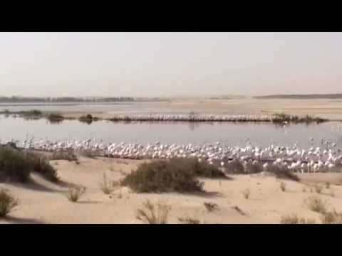 A View From Above: Conservation Drones in Action at Al Wathba Wetland Reserve