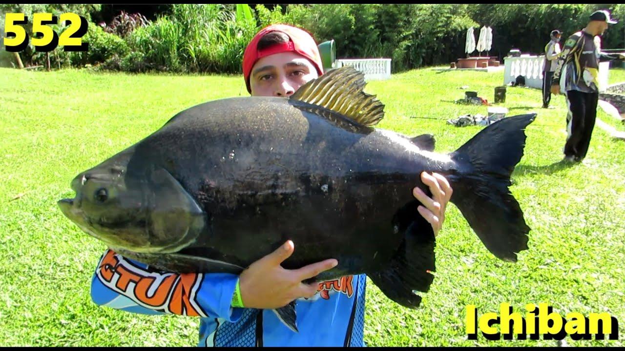 Ichiban - Pão e Anteninha em nossa pescaria - Fishingtur na TV 552