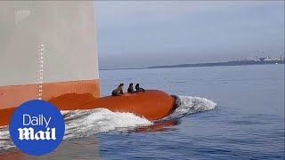 Three clever seals hitch a ride on the bow of a huge ship
