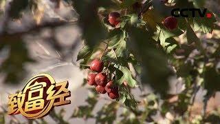 《致富经》 20200204 东北媳妇的酸甜财富| CCTV农业
