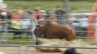 Charity rodeo photographer survives goring by bull