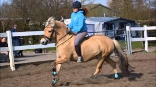 Ponyhof Aagtekerke Pasen 2015!♥