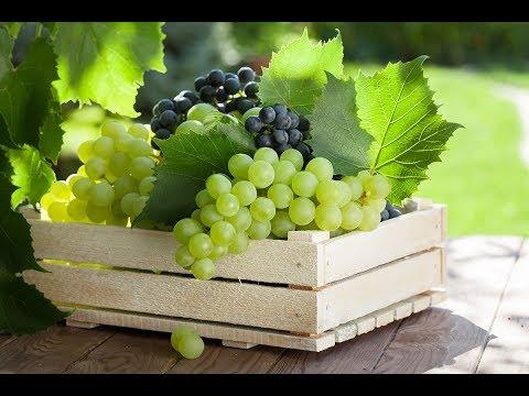 Рынок винограда в