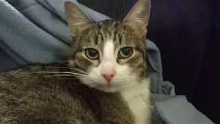 Просто глажу своего кота - Филю