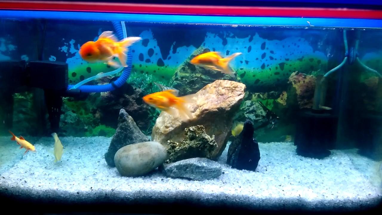 simple aquarium setup at home by pritam saha youtube