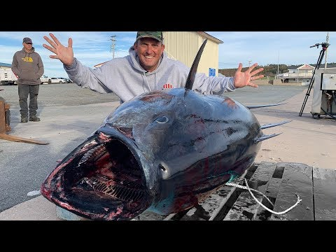 How To CATCH A GIANT!!! Giant Bluefin Tuna! Nova Scotia, Canada
