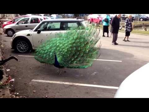 Peacock Garden Centre