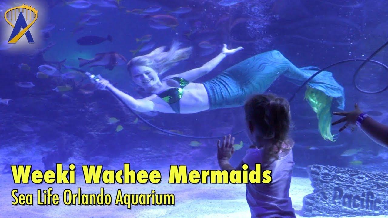 Sea Life Orlando Tickets