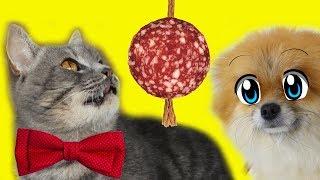 ЧТО БУДЕТ ЕСЛИ забыть покормить кота и собаку? Кот Макс против.