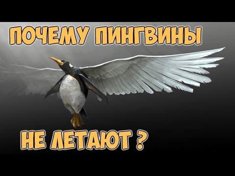 ПОЧЕМУ ПИНГВИНЫ НЕ ЛЕТАЮТ? WHY DO NOT PENGUINS FLY?