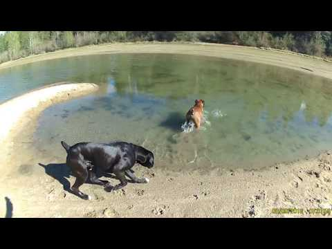 Hilarious Goofy Boxers First Day at the River After Long Winter Best Ending Ever!!
