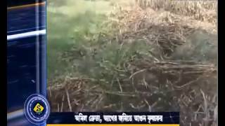 WITH NO BUYER, FARMER SET FIRE TO CANE FIELD