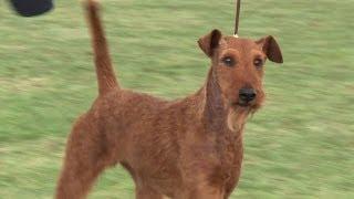 Windsor Championship Dog Show 2013 Terrier Group