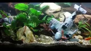 250 Liter Aquarium Becken neu Einrichten