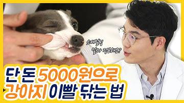 단 돈 5000원으로 강아지 이빨 닦는 법 EP.02 [설채현의 설견지명]