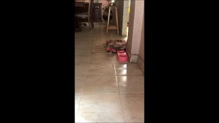 "Adorable Dog Walks Toward Mom as She Says ""How Beautiful"""