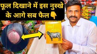 पीछा दिखाने का पक्का इलाज विक्की पंसारी|Cattle Prolapse Treatment solution in Hindi📞7015994967
