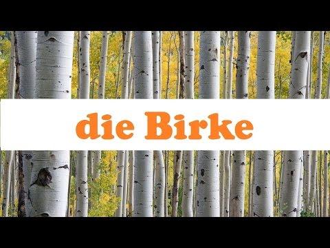 Die Birke ☆ Baumwissen