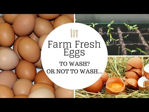 Farm Fresh Eggs: To WASH? or not to WASH...