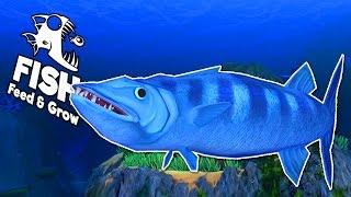 CÁ NHỒNG KHỔNG LỒ!!| Feed and Grow: FISH[11]