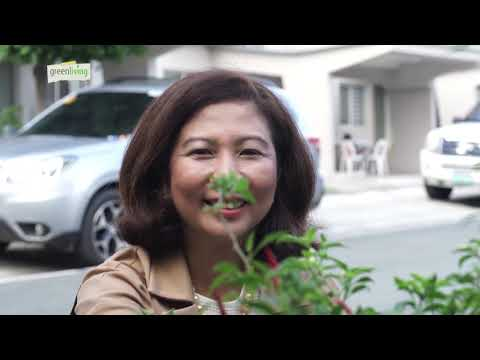 Urban Gardening Philippines:  UGM featured on Green Living