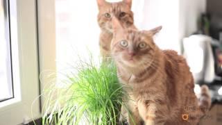 Rysiek i Marchewka dla tygrysów - wersja alternatywna :) #KotyDlaTygrysa WWF