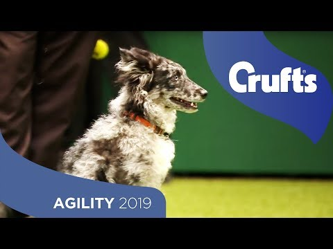 Agility - Kennel Club Novice Cup Final - Medium And Large - Agility | Crufts 2019