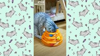 funny video 2018-Cat vs Dog so cute and funny