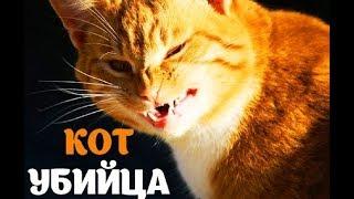 Кот убил хозяина.А нечего было злить)))Очень смешное видео!