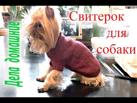 как связать свитер для собаки своими рукамиодежда для собак на