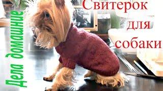 Как связать свитер для собаки своими руками.Одежда для собак на канале