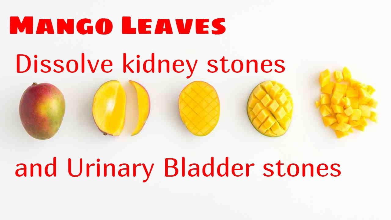 Best Dog Food To Dissolve Bladder Stones