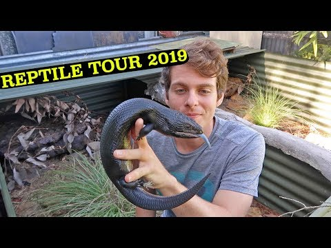 REPTILE HOUSE TOUR 2019