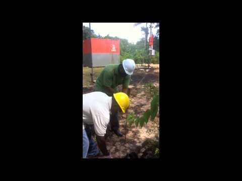 Soil Remediation Project-DE OIL IT