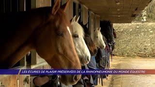 Yvelines | Les écuries de Plaisir préservées de la rhinopneumonie du monde équestre