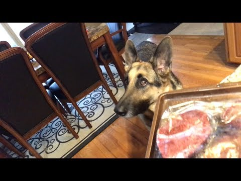 Cooking with German Shepherd, Odin
