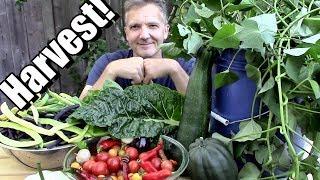 September Vegetable Garden Harvest! Lo¢al Food at its Best! 🍅🌶️ 🥗