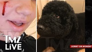 Repeat youtube video Obama's Family Dog Sunny Bites White House Guest | TMZ Live