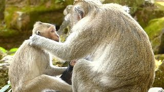 Stop Janet | Jane Mother Weaning Janet Push and Grab Janna | Janet Scared | Monkey Crying