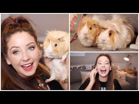Q&A - My Furry Friends & Christmas | Zoella