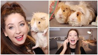 Repeat youtube video Q&A - My Furry Friends & Christmas | Zoella