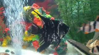 Красивые аквариумные рыбки, видео аквариума