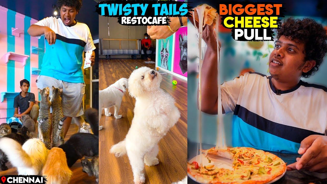 Food with Cats and Puppies - Twisty Tails - Irfan's View