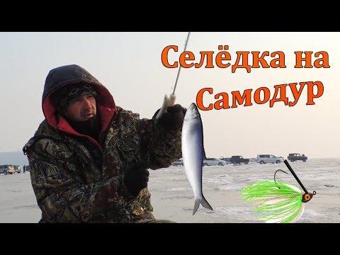 Рыбалка на Самодур Ловля Селёдки на Бороду. Устья Реки Суйфун Тавричанка Приморье.