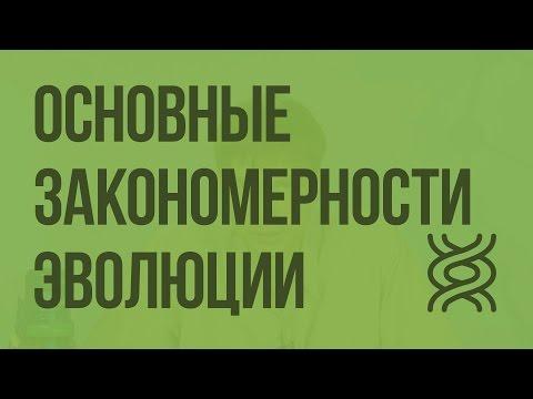 11 биология видеоурок биология