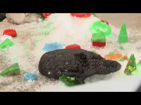 All Our Otters Want for Christmas are...Ice Treats!