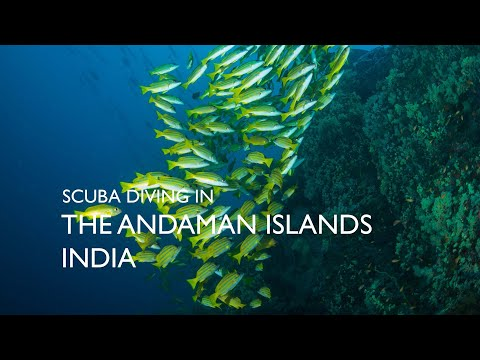 Scuba Diving in Andamans Islands
