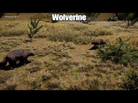 Far Cry 5: Wolverine Fighting and Hunting animals