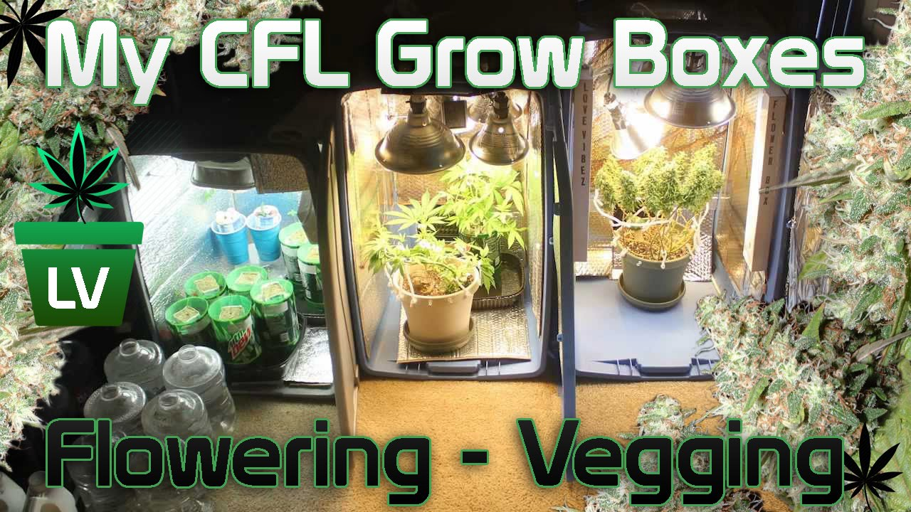 & CFL Grow Box for Vegging and Flowering - YouTube Aboutintivar.Com