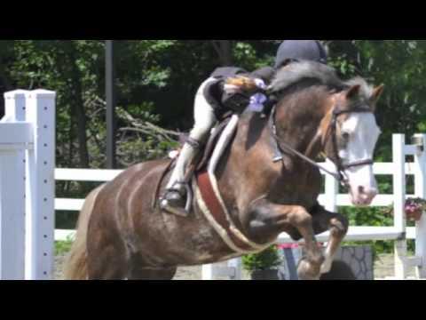 Ardmores Masked Marvel Pony